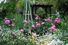 from Cottage Gardens on GW forum