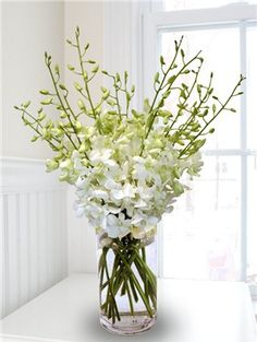 White Dendrobium Orchid | Dendrobium flowers have a butterfly-like shape with several blossoms on each stem.  They work well for body flowers as well as in bouquets.