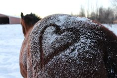 In riding a horse, we borrow freedom. #horse #photography #winter