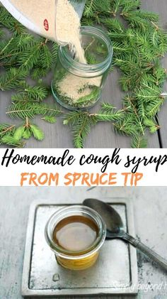 Learn two simple ways how to turn spruce tips into a spruce tip syrup that dissolves mucus and eases expectoration. #herbalremedies, #homeremedies, #sprucetipssyrup, #homemadecoughsyrup, #coughsyrup, #sprucetips