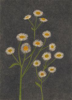 ilustración de Yoko Nakajima