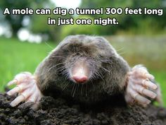 10 Amazing Animal Facts You Probably Didn't