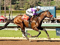 Undefeated Nyquist showed no signs of rust in his 2016 debut Feb. 15, when he took the $200,000 San Vicente Stakes (gr. II) at Santa Anita Park