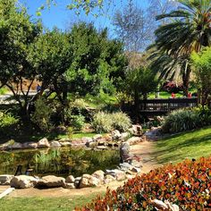 via @kaylemahon  Beautiful day for a nap by the koi pond. My school is better than yours #sdsu #sandiego