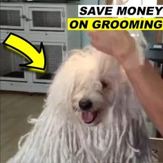 Baby Dogs, Pet Dogs, Dogs And Puppies, Funny Dog Videos, Funny Dogs, Dog Clippers, Dog Haircuts, Cute Dogs Breeds, Secret Life Of Pets