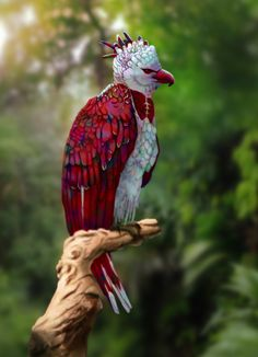 Here's a beautiful Rainbow Harpy Eagle. The Harpy Eagle can be found in Mexico and south America And Brazil mainly. Rare Birds, Exotic Birds, Colorful Birds, Exotic Pets, Most Beautiful Birds, Pretty Birds, Unusual Animals, Rare Animals, Exotic Animals