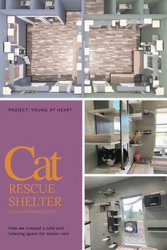 Making of a cat shelter setup - Project Young at Heart Bug Bite Relief, Cat Heaven, Cat Cafe, Cat Room, Modern Tropical, Cattery, Young At Heart, Cat Furniture, Walkways