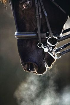 Beauty and excitement. The elements of trust, talent, training, love, and danger -- horse and rider forming an arc of beauty, efficiency, and power, like a double helix. DNA, the code to life.
