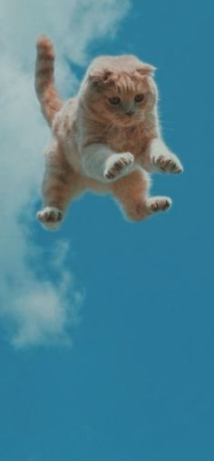 Backgrounds, Cats, Animals, Gatos, Animales, Animaux, Animal, Cat, Animais