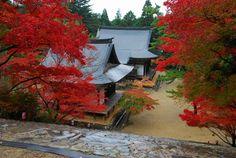 京都  高山寺 。金堂前の石段から。一番手前が五大堂、その奥が毘沙門堂。定番の一つ。