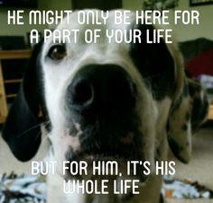 Take care of your dog and stop animal abuse