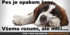 Pes je opakem ženy,… Funny Memes, Jokes, Good To Know, Animals And Pets, Comedy, Funny Pictures, Lol, Disney, Woman
