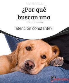 Tipos De Collares De Castigo Para Perros Por Que Buscan Una Atencion Constante Entrenamiento Perros
