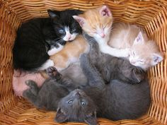 All sizes | Kittens in a basket, via Flickr.