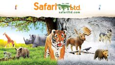 Good Afternoon ‪#‎Safariologists‬! With all this talk about the weather around the United States, our ‪#‎Safari‬ animals feel no different! There is some major beef between the winter vs. tropical animals happening! ‪#‎LoveSafari‬ ‪#‎Staywarm‬ or ‪#‎CometoFlorida‬ #SafariLtd