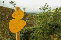 Quinta da Toural - Ecovia do Vez - A Ecovia do Vez desenvolve-se ao longo dos…