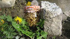 Čistené vlašské orechy v púpavovom mede ~ iGURMAN.com  Cez víkend som bol mimo Bratislavy, bez manželky :-)  Rozmýšľal som, čo jej prinesiem z víkendového výletu. Stál som záhrade rodinného domu a pozerám okolo seba. Vidím orechy a rozkvitnuté kvety púpav. Mimochodom bolo 3. novembra, takto neskoro som ešte púpavy nevidel kvitnúť. A bolo rozhodnuté spravím púpavový med s vlašskými orechami.