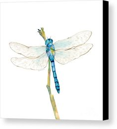 Blue Canvas Print featuring the painting Blue Dragonfly by Amy Kirkpatrick