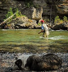"""100 Likes, 6 Comments - @mcphoto99 on Instagram: """"Dog days of summer #flyfish #flyfishing #troutown"""""""