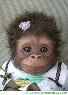 When I grow up I wanna have a monkey ahhhhhhhhhhh <3