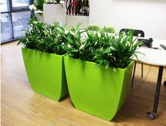 GORGEOUS stylish living OFFICE PLANTS – can be rented with full maintenance or purchased. Interior Design Office Space, Decor Interior Design, Interior Decorating, Container Design, Container Plants, Container Gardening, Indoor Office Plants, Indoor Plants, Live Plants