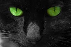 I was wondering if I could join your ShadowClan? - If I can, this is me: Blackwater- Black long-haired she-cat with green eyes. question and answer in the WARRIOR CATS club Crazy Cat Lady, Crazy Cats, Pugs, Cats With Big Eyes, Photos Of Eyes, Warrior Cats, Green Eyes, Cool Cats, Funny Cats