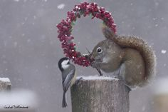Tell me Red , do you receive all your relatives in your hole for Christmas by Andre_Villeneuve http://500px.com/photo/54791090