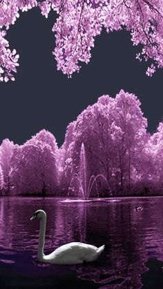 Background Beautiful Nature Wallpaper - UHDPic Wallpaper