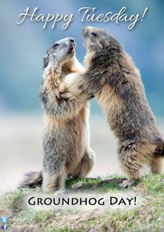 #Happy #Tuesday! :) No shadow! Punxsutawney Phil predicts an early spring! YAY! :)  #GroundhogDay - http://ift.tt/1oNRVdq