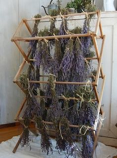 Drying lavender by janet