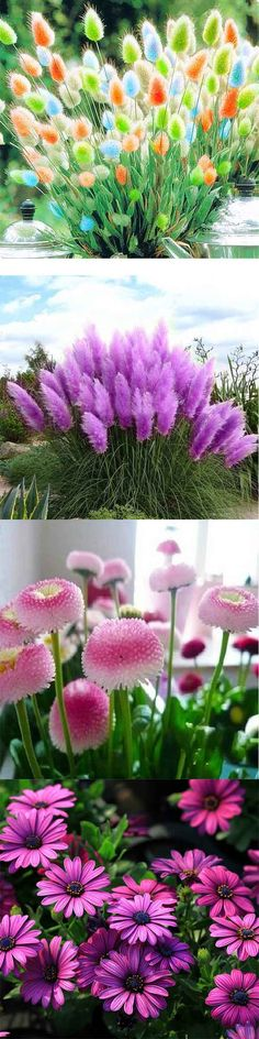 I want to plant a whole garden for you - Pflanzideen Beautiful Flowers, Outdoor Flowers, Beautiful Gardens, Flowers, Pretty Flowers, Easy Landscaping, Garden Seeds, Plants, Landscaping Plants