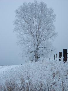 Miss those minnesota winter mornings
