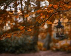 Visit the post for more. Autumn Cozy, Fall Winter, Autumn Feeling, Dark Autumn, October Country, October 25, Over The Garden Wall, Autumn Scenery, Autumn Aesthetic