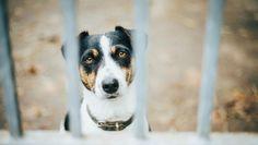 Coronavirus : les inquiétudes sans fondement font craindre des abandons - Fondation 30 Millions d'Amis Abandon, Dog Rooms, Dog Birthday, Birthday Cake, France Europe, Interesting News, Hunting Dogs, Homemade Dog, Dog Quotes