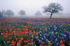 Texas hill country, Fredericksburg