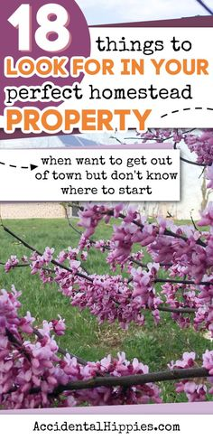 Homestead Land, Homestead Property, Homestead Survival, How To Buy Land, Off The Grid, Your Perfect, Getting Out, Country Living, Homesteading