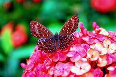 Jardin et Fleurs: la signification de fleur de lotus