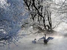 UK Weather: Earliest recorded autumnal arrival of migratory swan could be sign of long, cold winter   House & Home   Property   The Independent