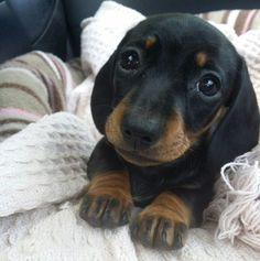 And this puppy-dog-eyed sweetie. | 29 Puppies Who Are Far Too Cute For This World