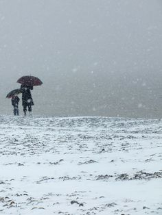 Cayeux-sur-mer - La plage de galets sous la neige - L`attente (Somme - 80410) [2013] (Photo de Didier Desmet)
