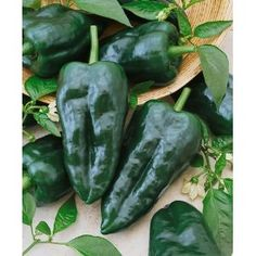 Ancho Grande Hot Pepper seeds, Pablano when green, 60 +  more tips at The Art of Gardening  http://pinterest.com/dsgoodin1/