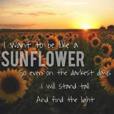 I want to be like a sunflower. Quote. Light. Sunflower.