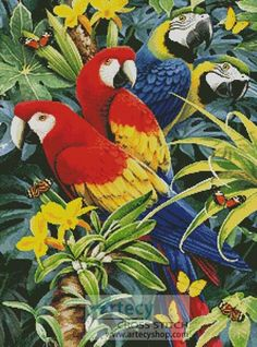 Tropical Macaws - Cross Stitch Chart - Click Image to Close