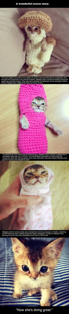 Thanks human, you save my life and my cuteness...A wonderful rescue story about a kitten named Wasabi-Chan