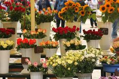 The best flower shop Dubai will provide everything you are looking for and customize the options to get good customer satisfaction. List Of Flowers, Types Of Flowers, Flower Shop Dubai, Flower Shops, Funny Stories To Tell, Special Gifts For Him, Flower Delivery Service, Elderly Home, Fresh Image