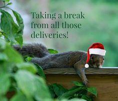 Christmas Squirrel, Parrot, Bird, Animals, Animais, Parrot Bird, Animales, Animaux, Birds