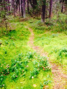 Lokakuun loppu ja harmaudesta ei ole tietoakaan metsässä