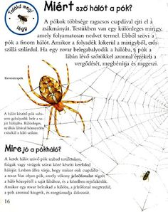 Picasa Webalbumok Bugs And Insects, Nature Study, Animal Crafts, Environment, Science, School, Animals, Picasa, Animais