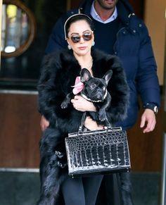 b5a4ca62de27e4 15 Times Celebrity Dogs Dressed Better Than You Do