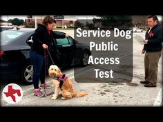 Service Dog Public Access Test - YouTube